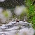 Photos: 野鳥 90