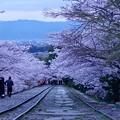 失敗作 「インクラインの桜」