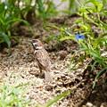 Photos: 野鳥 95