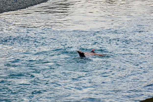 泳いでる~