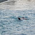 Photos: 泳いでる~