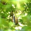 Photos: 野鳥 2
