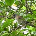 Photos: 野鳥 3