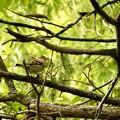 Photos: 野鳥 5
