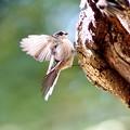 Photos: 野鳥 9