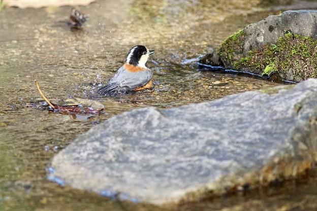 野鳥 10