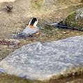 Photos: 野鳥 10