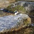 Photos: 野鳥 10-2