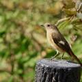 Photos: 野鳥 11