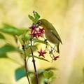野鳥 17