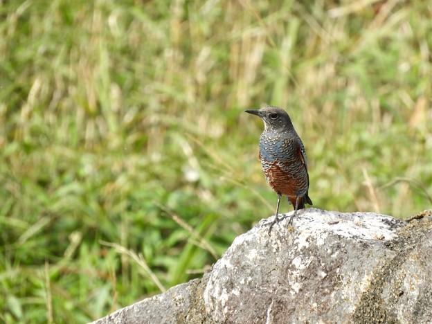 野鳥 18