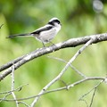 Photos: 野鳥 19