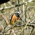 Photos: 野鳥 20