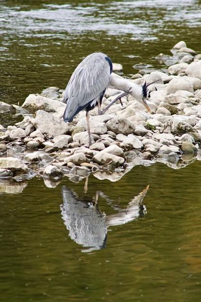 Photos: 野鳥 21
