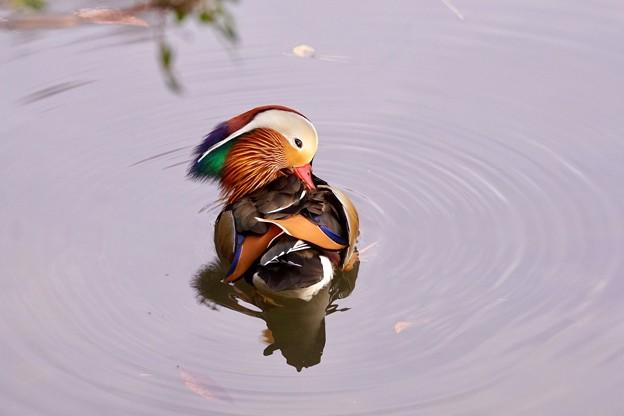 Photos: 野鳥 23