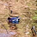 Photos: 野鳥 24