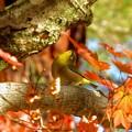 野鳥  25