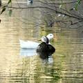 Photos: 野鳥 27