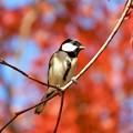 野鳥 28