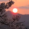 Photos: 岩手県・北上展勝地の夜明け