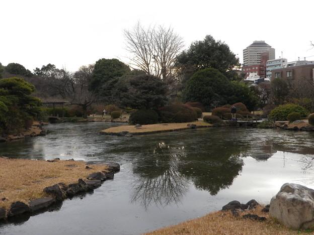 薄氷が張った池