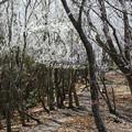 樹氷に遭遇