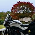 Photos: 2019/11/09・・・色付き始めNo03