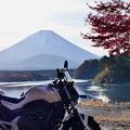 Photos: 2019/11/17・・・紅葉の具合は?No_01