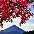 Photos: 2019/11/17・・・紅葉の具合は?No_05