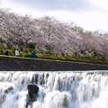 2020/03/29・・・花散らしNo03