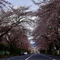 Photos: 2020/03/29・・・サクラの季節No01