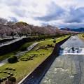 Photos: 2020/03/29・・・サクラの季節No03