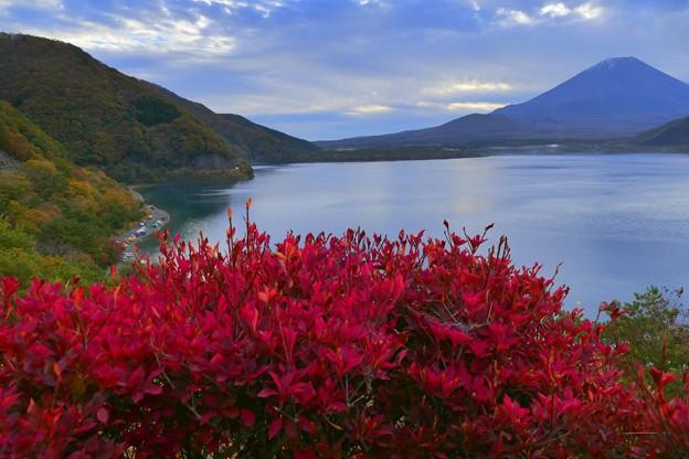 2020/11/08・・・富士五湖の紅葉No01