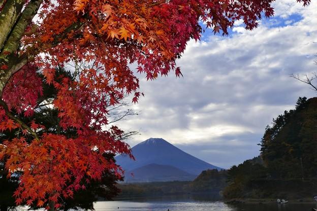 2020/11/08・・・富士五湖の紅葉No02