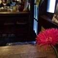 写真: 喫茶店 国分寺の「ほんやら洞」 18042018