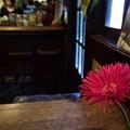 Photos: 喫茶店 国分寺の「ほんやら洞」 18042018