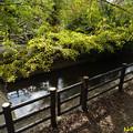 写真: 玉川上水 07112018