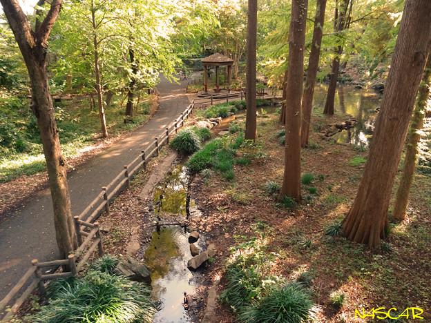 林試の森公園 10112018
