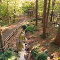 Photos: 林試の森公園 10112018