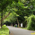 都立林試の森公園 13082019