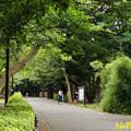 Photos: 都立林試の森公園 13082019