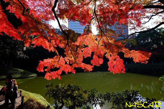 Photos: 紅葉 01122018