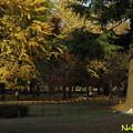 Photos: 小春日 27112018