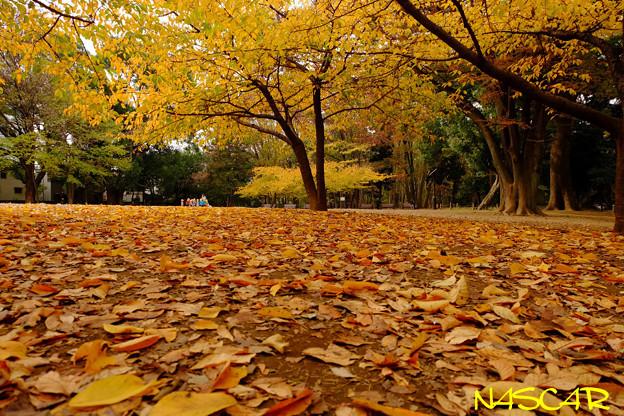 落ち葉の公園 03122018