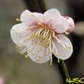 Photos: ハナカミ(花香実) 15022020