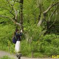 クロバナロウバイ(黒花蝋梅)を撮る 29042019