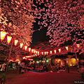 Photos: 夜桜(明るく)