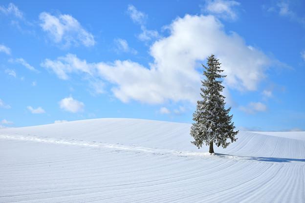 Photos: 北海道 美瑛。聖誕の樹