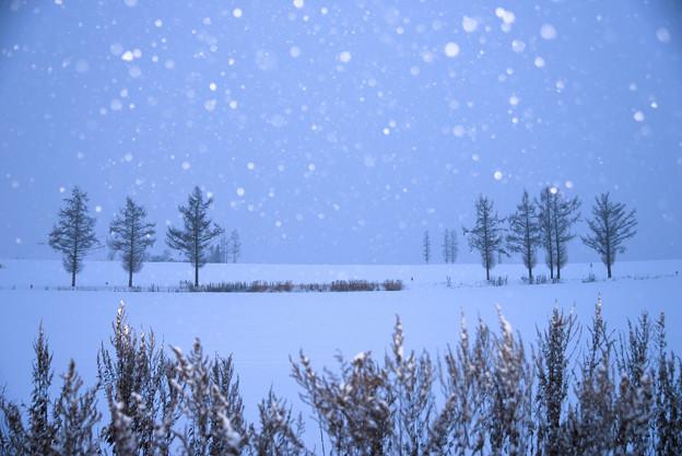 写真: 北海道 美瑛。柔和七星の丘