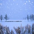 写真: 北海道|美瑛。柔和七星の丘